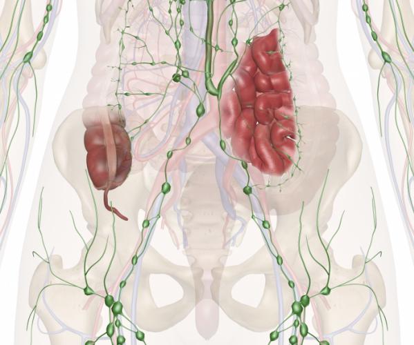 Таз лимфатическая система