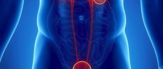 Воспаление мочевыводящей системы